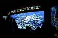 新江ノ島水族館の写真